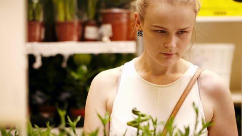 Beautiful woman arranging ornamental bamboo Stock Video Footage