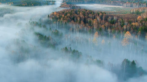 Autumn forest in the fog. Time Lapse Footage