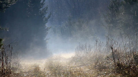 Morning mist over the forest road Stock Video Footage