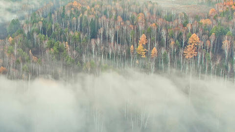 Autumn forest in the fog Footage