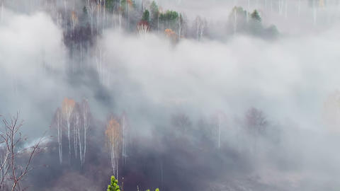 Autumn forest in the fog Stock Video Footage