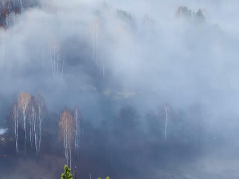 Autumn forest in the fog. Time Lapse Stock Video Footage