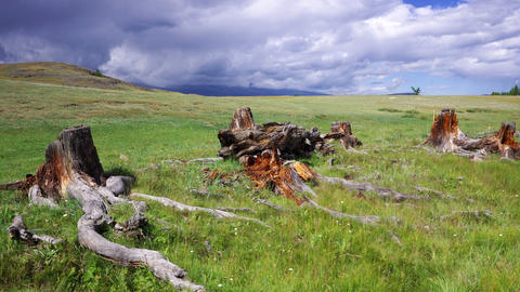 4K Stumps and snags in steppe time lapse Stock Video Footage
