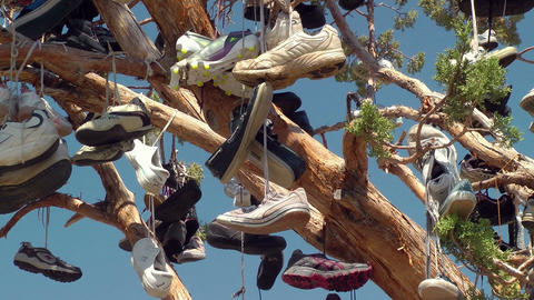 Tree full of Shoes Stock Video Footage