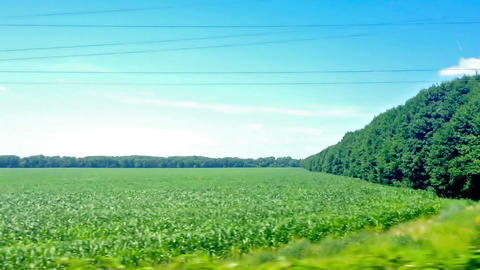 view from the train window. summer landscape Stock Video Footage