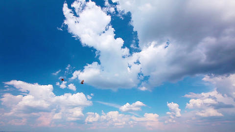 butterfly on a background of the cloudy sky Stock Video Footage