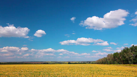 yellow field and cloudy sky Footage