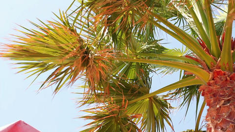 Palm tree and blue sky Stock Video Footage