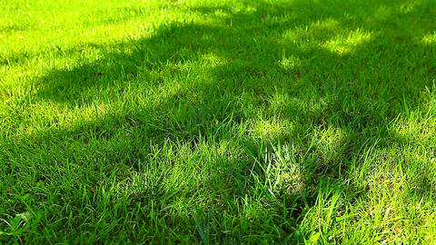 shadow on the green grass Stock Video Footage