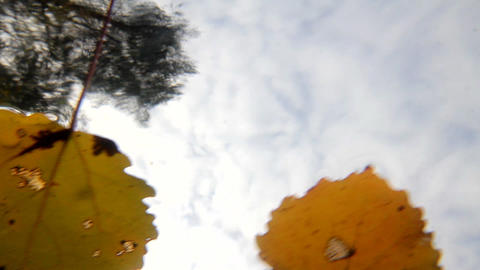 autumn leaves on a water surface and sky Stock Video Footage