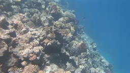 red sea snorkeling Stock Video Footage