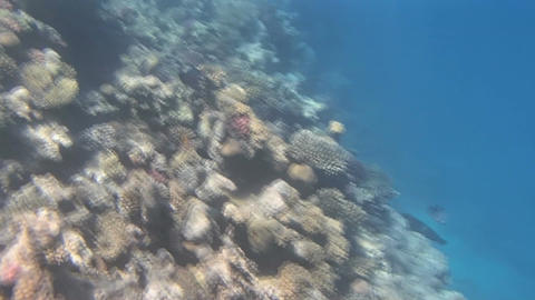 red sea snorkeling Footage