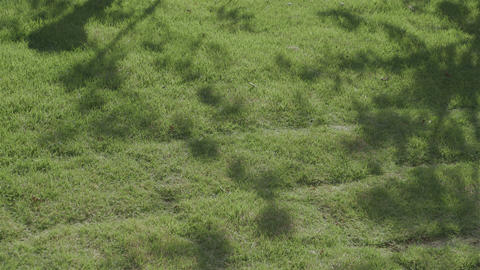 HD A Lawna Grass Plot Japan stock footage