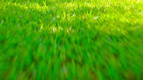 flying in the green grass Stock Video Footage