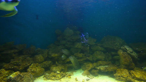 sea turtles and sharks Footage