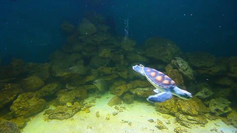 sea turtles and sharks Stock Video Footage