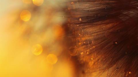 dandelion macro - drops of rain Stock Video Footage