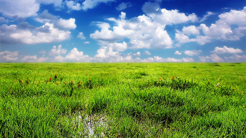 green grass on a background cloudy sky Stock Video Footage