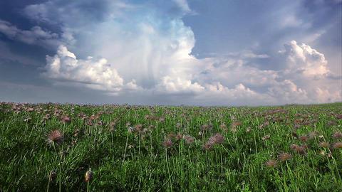 field of spring flowers Stock Video Footage