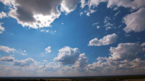 summer landscape Stock Video Footage