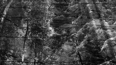 Black and white forest Stock Video Footage
