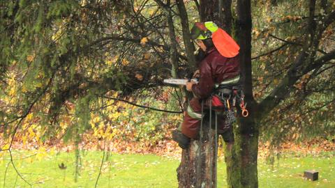 Arborist Cutting Branches Off Douglas Fir Stock Video Footage