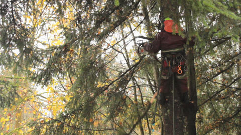 Arborist Skillfully Uses Chainsaw To Trim Douglas Footage