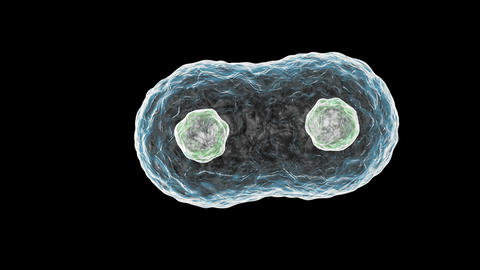 Cells multiplied Footage