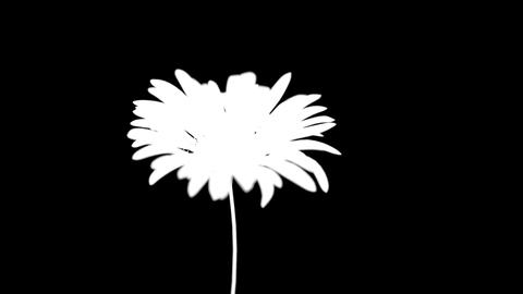 Wilted flower Stock Video Footage