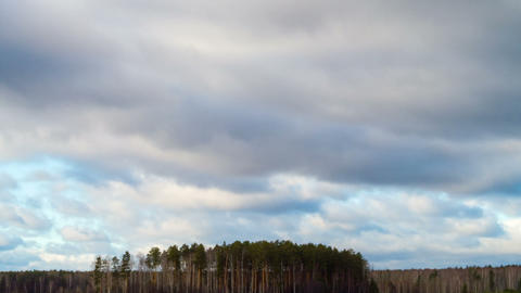 Rain clouds over a pine forest. Time Lapse Stock Video Footage