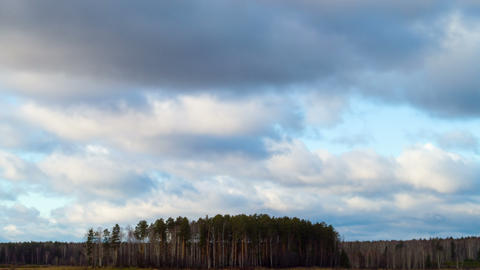 Rain clouds over a pine forest. Time Lapse. 4K Stock Video Footage