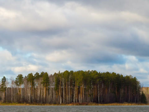 Rain clouds over a pine forest. Time Lapse Footage