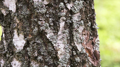 Camera moving along the tree trunk, closeup view Stock Video Footage