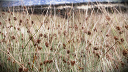 Wild grass blowing in the wind Footage