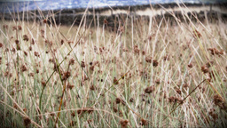 Wild grass blowing in the wind Stock Video Footage