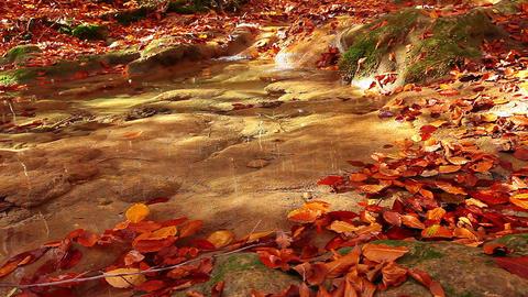 autumn mountain small river Footage