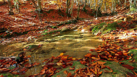 autumn mountain small river Stock Video Footage