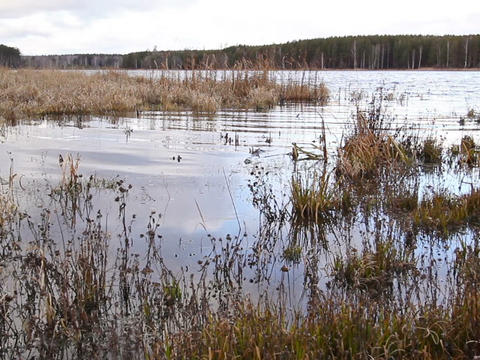 Pond in the autumn Stock Video Footage