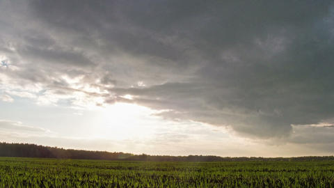 Sprouts at sunset. Time Lapse Stock Video Footage