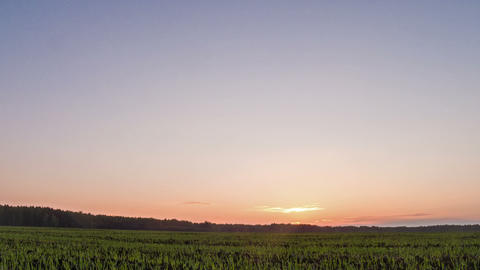 Sprouts at sunset. Sky. Time Lapse Stock Video Footage