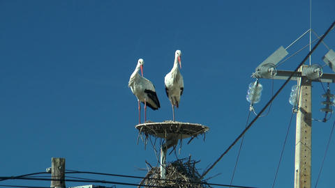 couple of storks taking off Stock Video Footage
