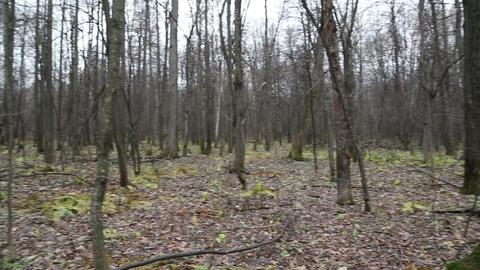 bare wood in late autumn Stock Video Footage