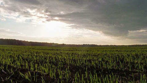 Sprouts at sunset. Ground. Time Lapse Stock Video Footage