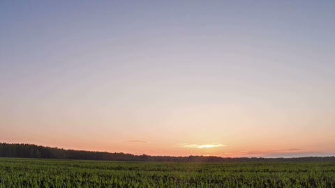 Sprouts at sunset. Sky. 4x3. Time Lapse. 480 Stock Video Footage
