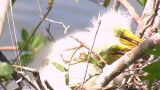 Florida Egrets-2 stock footage