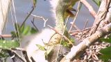 Florida Egrets-2 Stock Video Footage