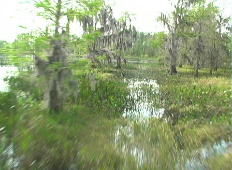 View from an Airboat (2) Stock Video Footage