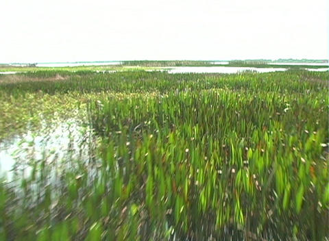View from an Airboat (4) Stock Video Footage