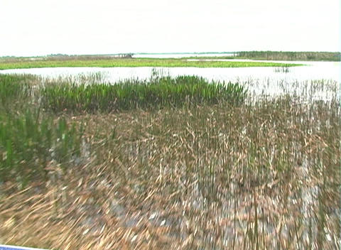 View from an Airboat (4) Footage