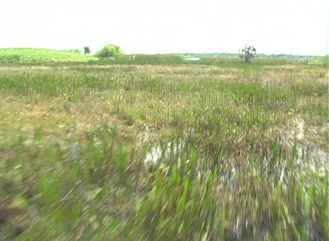 View from an Airboat (6) Stock Video Footage